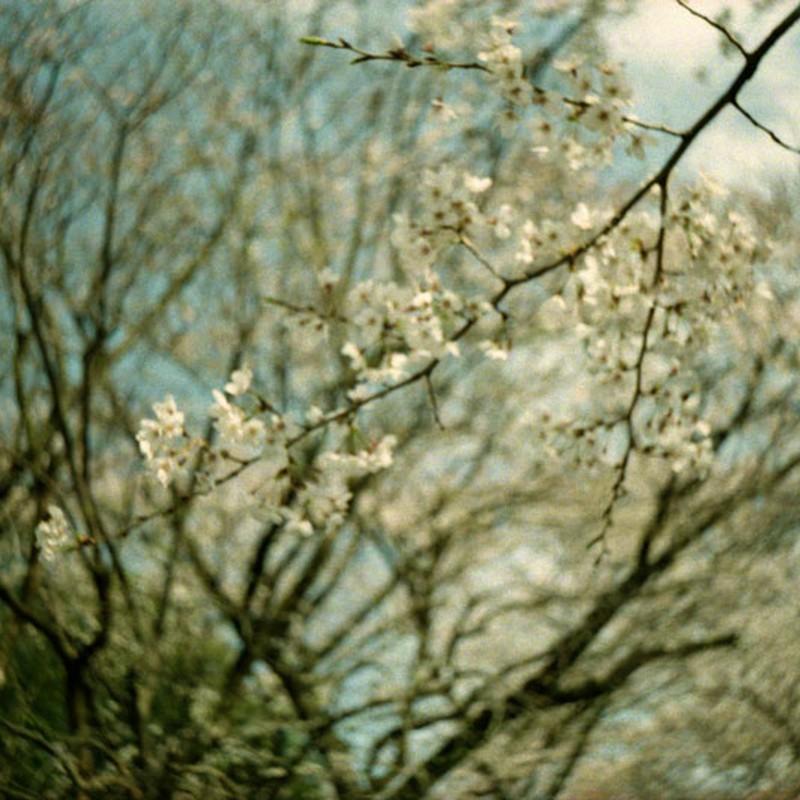 浮桜 その二