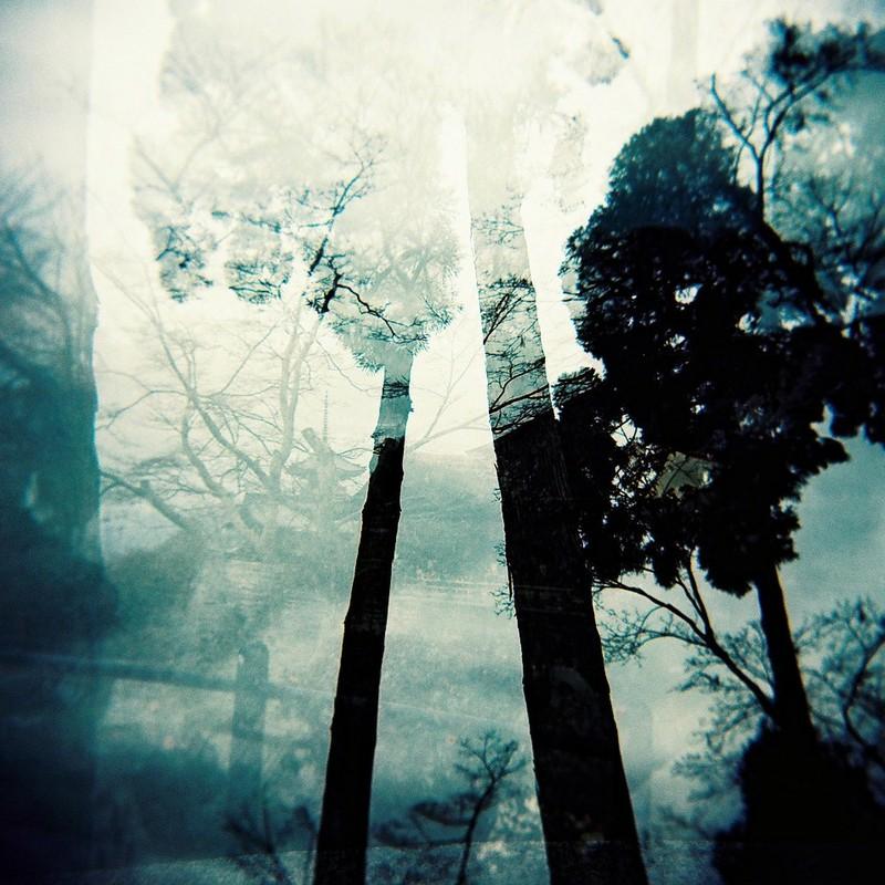 幻妖の森。