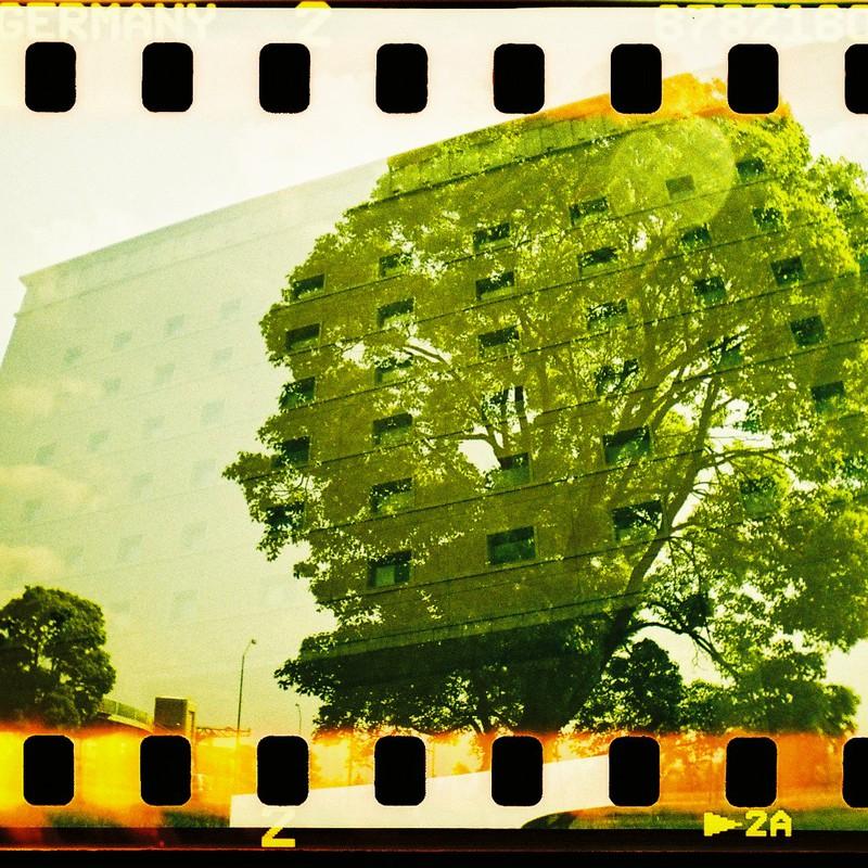 Träd och fönster
