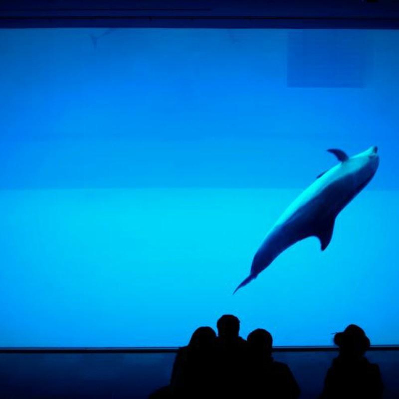 Fille avec les dauphins