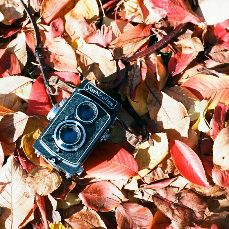 秋色じゅうたん