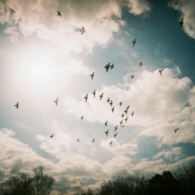 旋回する鳩の群れ