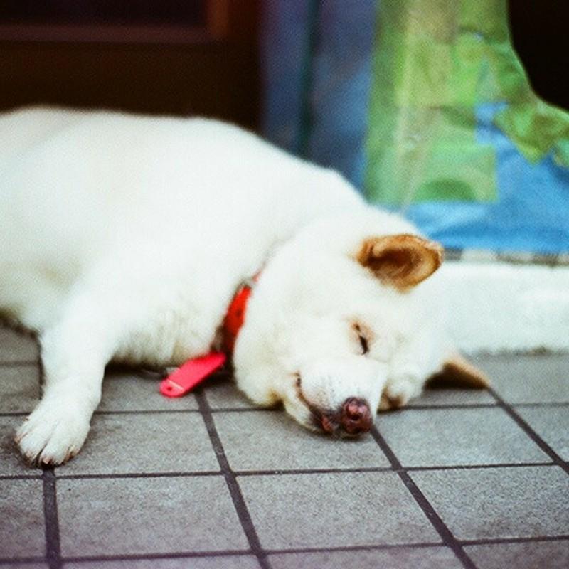 暑すぎて寝る!