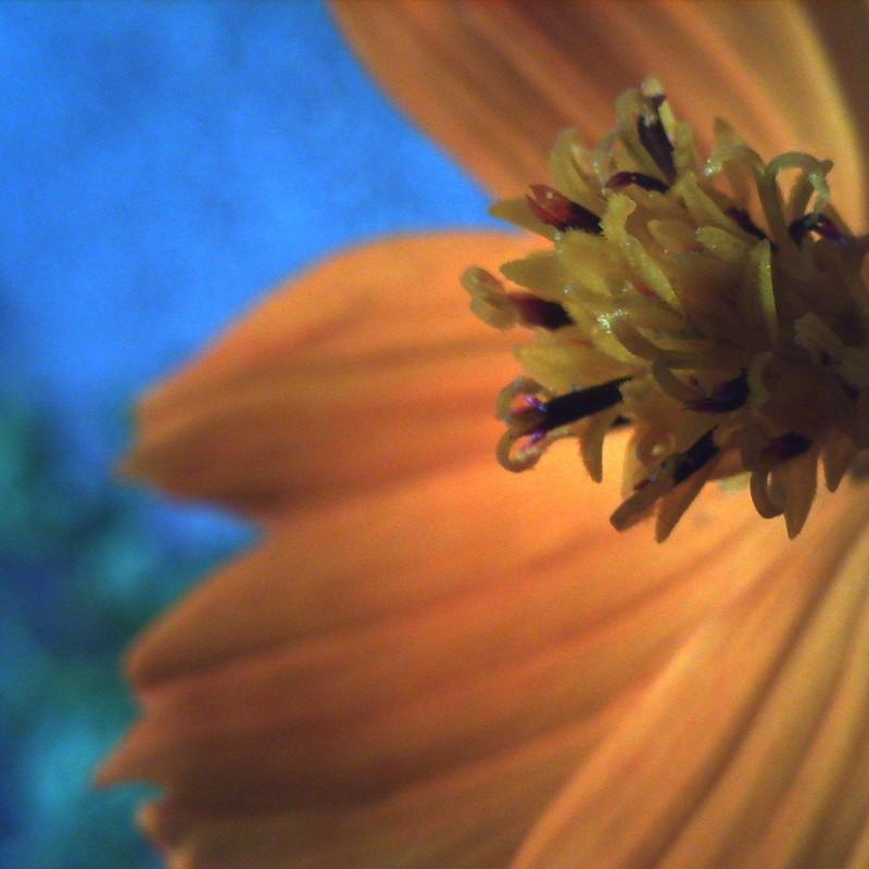 マクロで花。