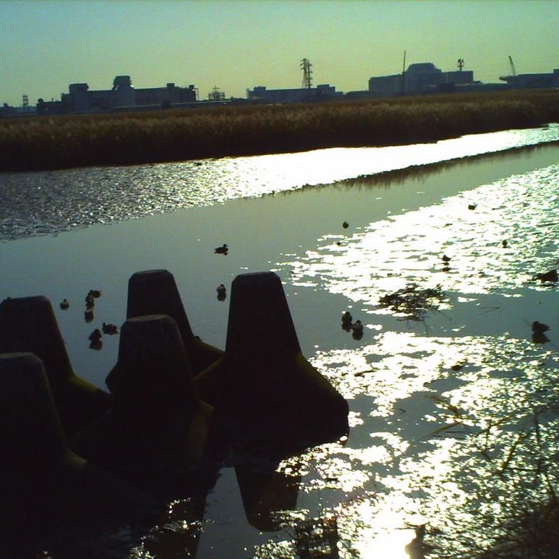 多摩川2009