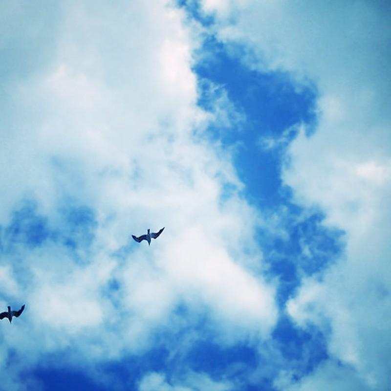 カモメの飛ぶ空