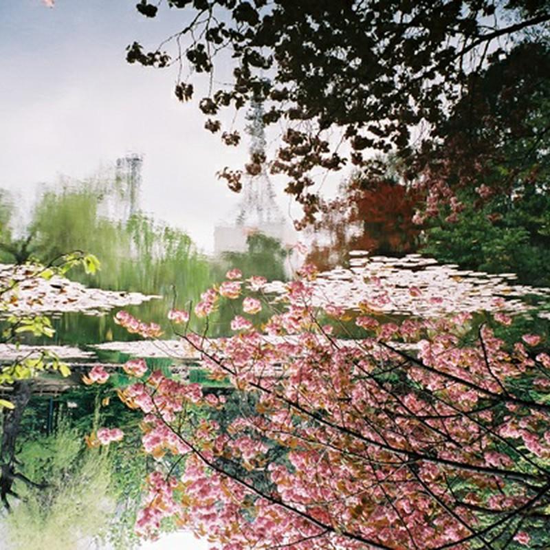 水面の桜*