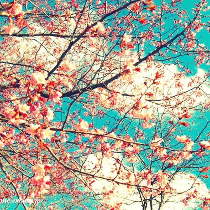 2010...桜フォト(3)