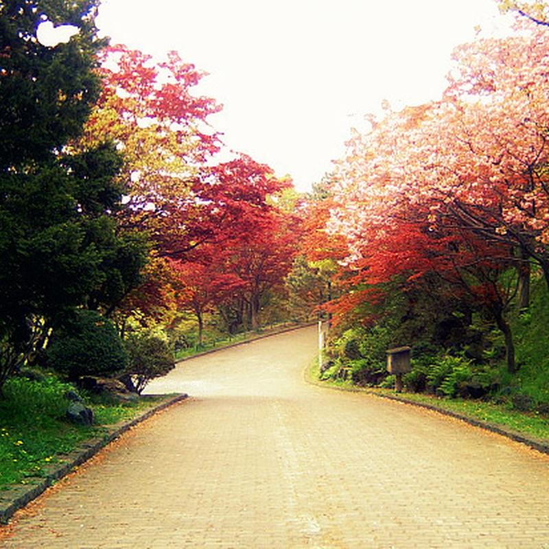 桜と紅葉の道