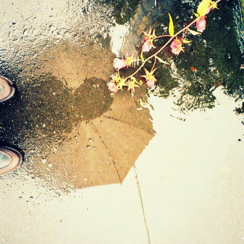 雨の日の・・・花と傘と私と