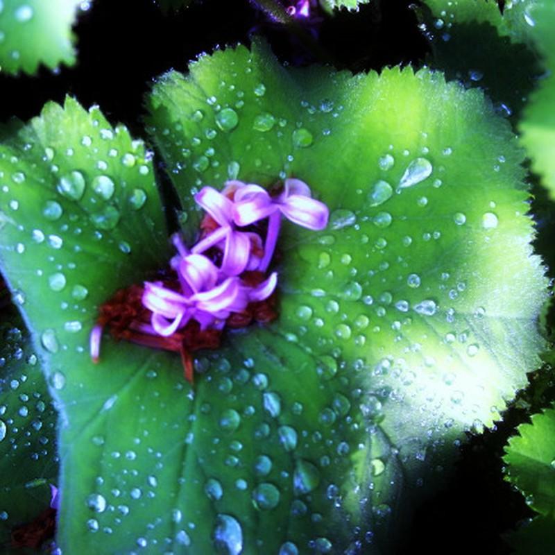 雨上がりに・・・落花と雫と