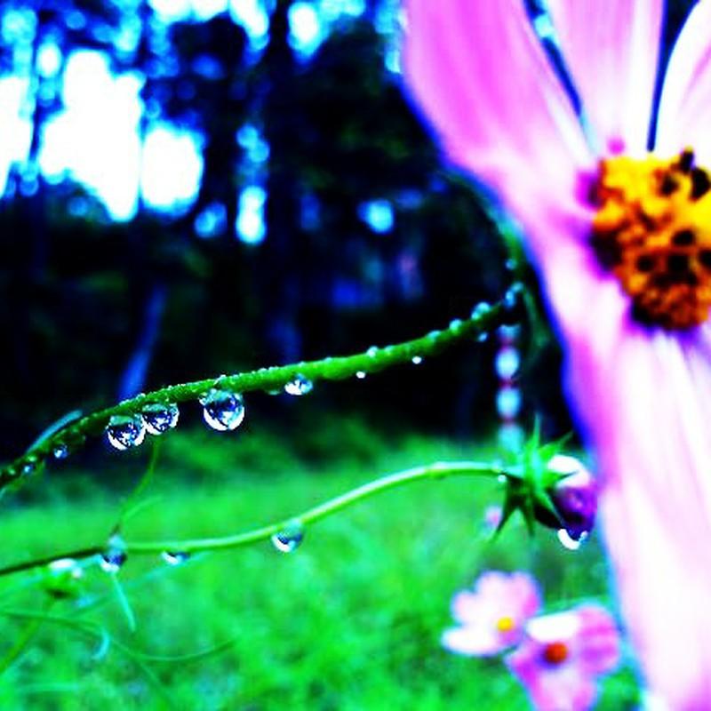 静寂に包まれた雨滴