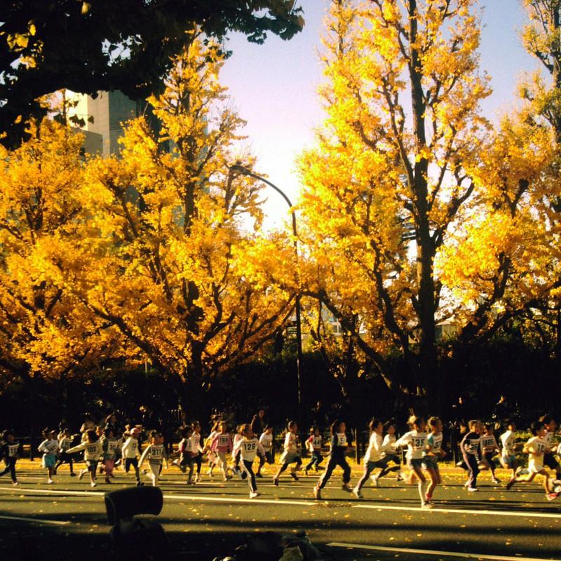 イチョウ並木でちびっ子マラソン大会