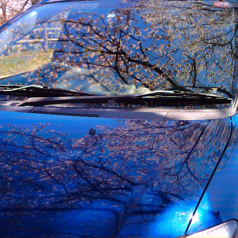 車に映る桜
