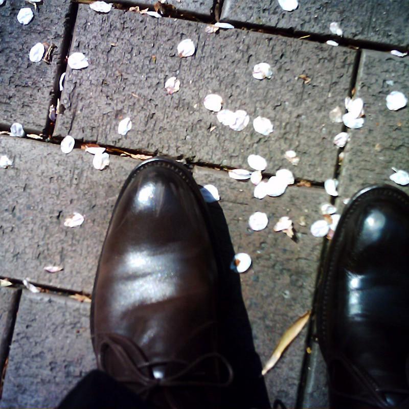 足下に桜の花びら