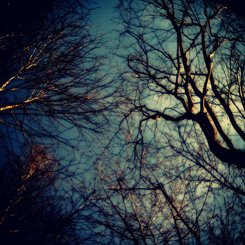 咲かぬ櫻、魔の森