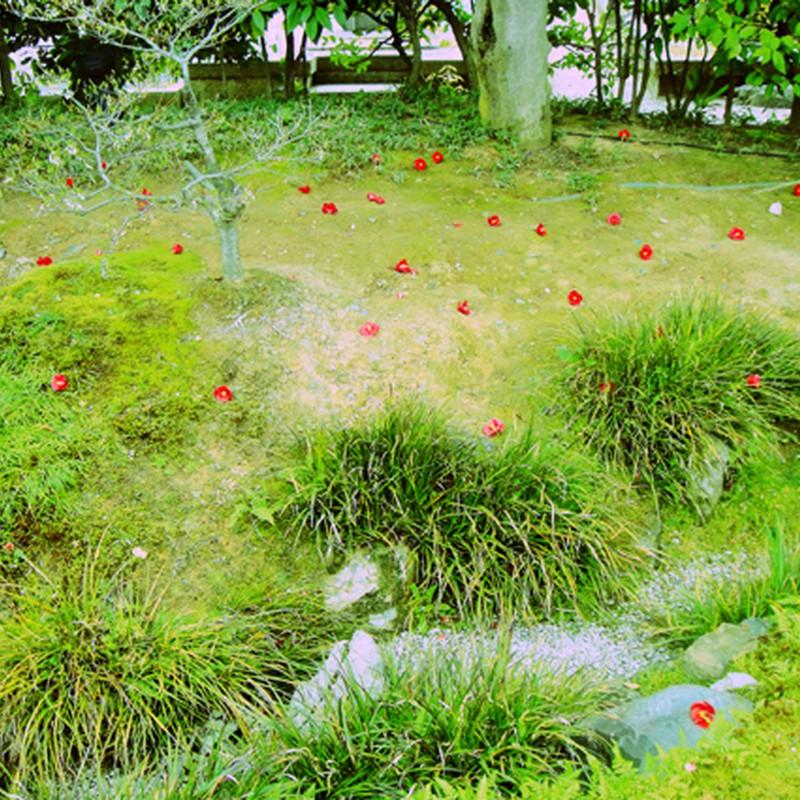 落ちた赤い花