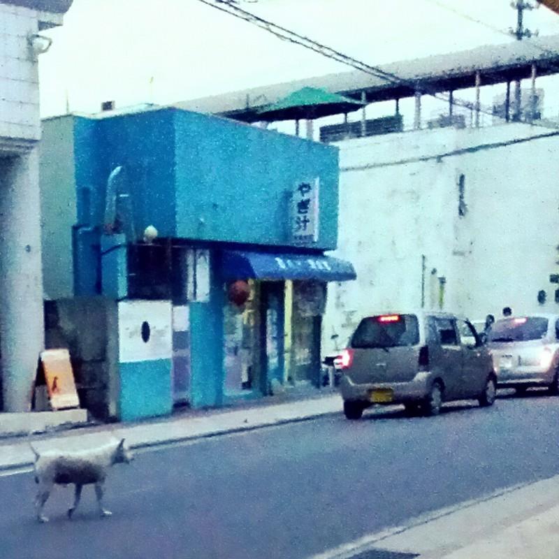 無謀な猫派の犬画像