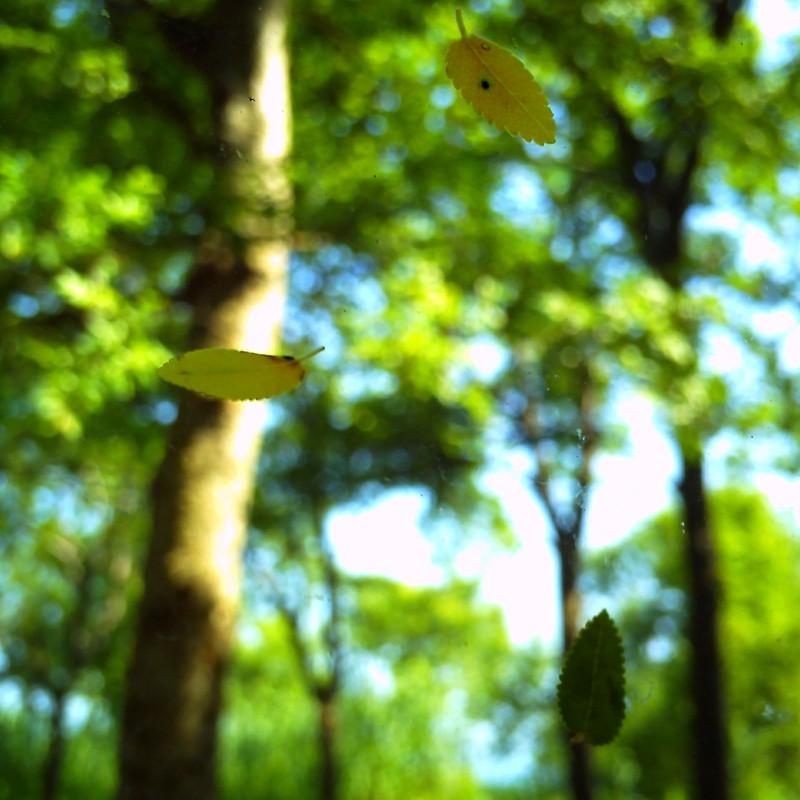 木漏れ日に、夏風が通る。