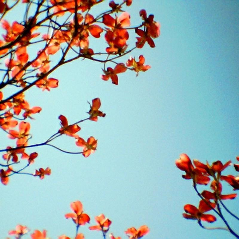 五月晴れに咲く