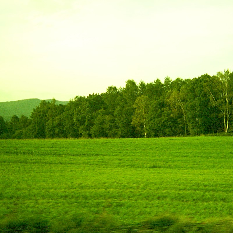 夕陽の牧場