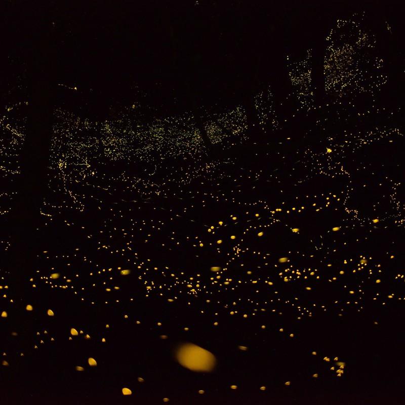 ヒメホタルの灯り