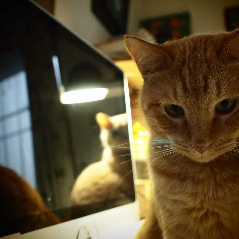 後ろの正面、ネコ兄弟。