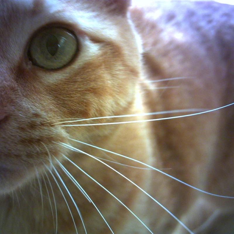 マイドオナジミノ、猫