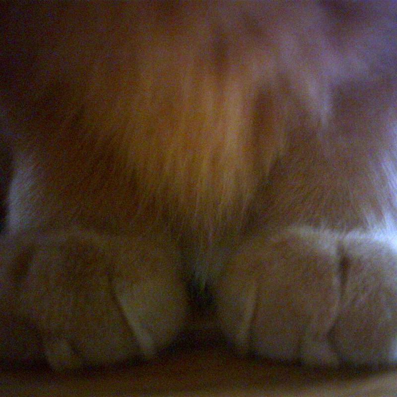 エサマツ、足。