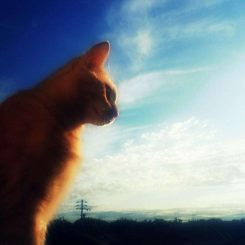 ソラとネコ。