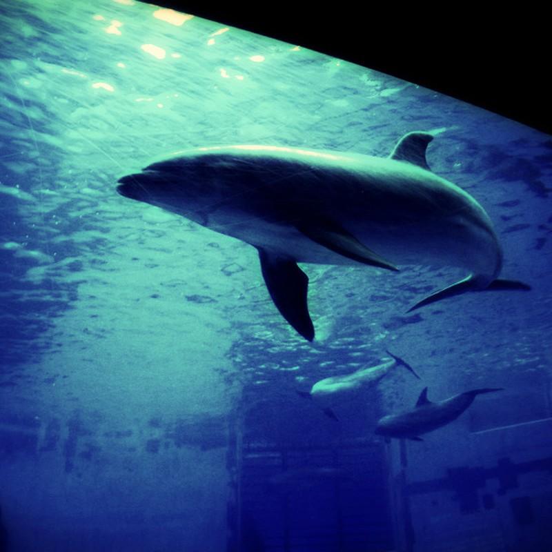 青い世界のイルカ。