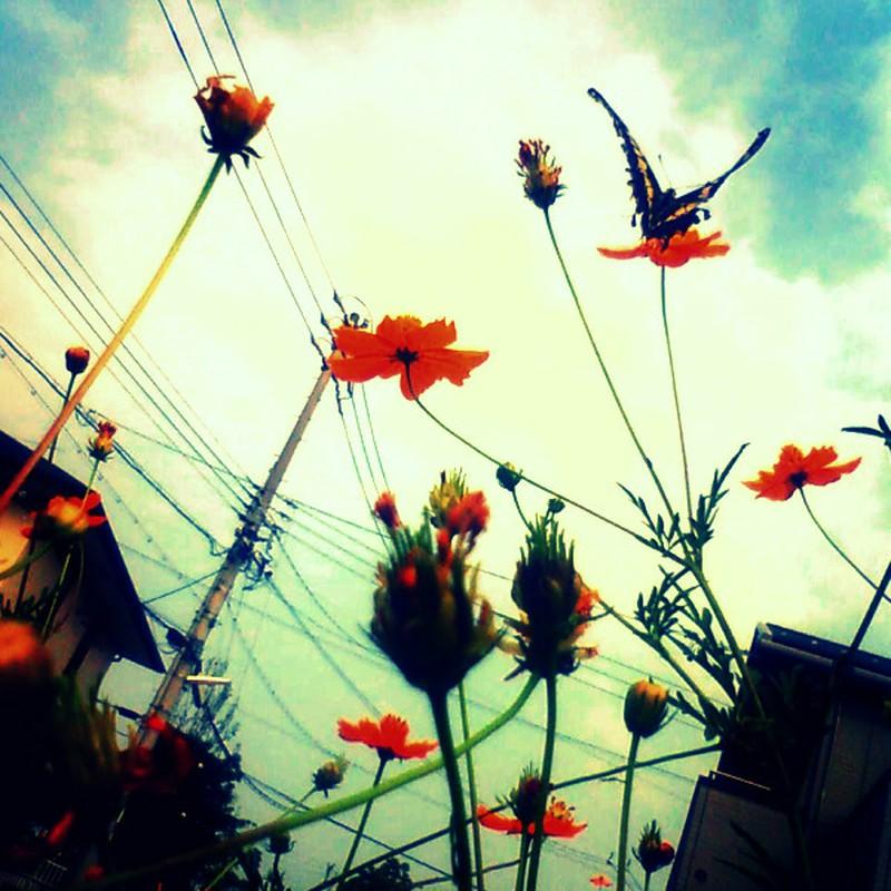 秋色と蝶。