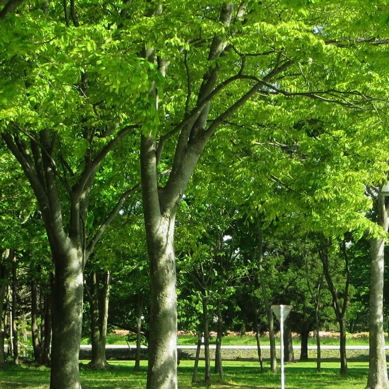 キャンパスの木陰
