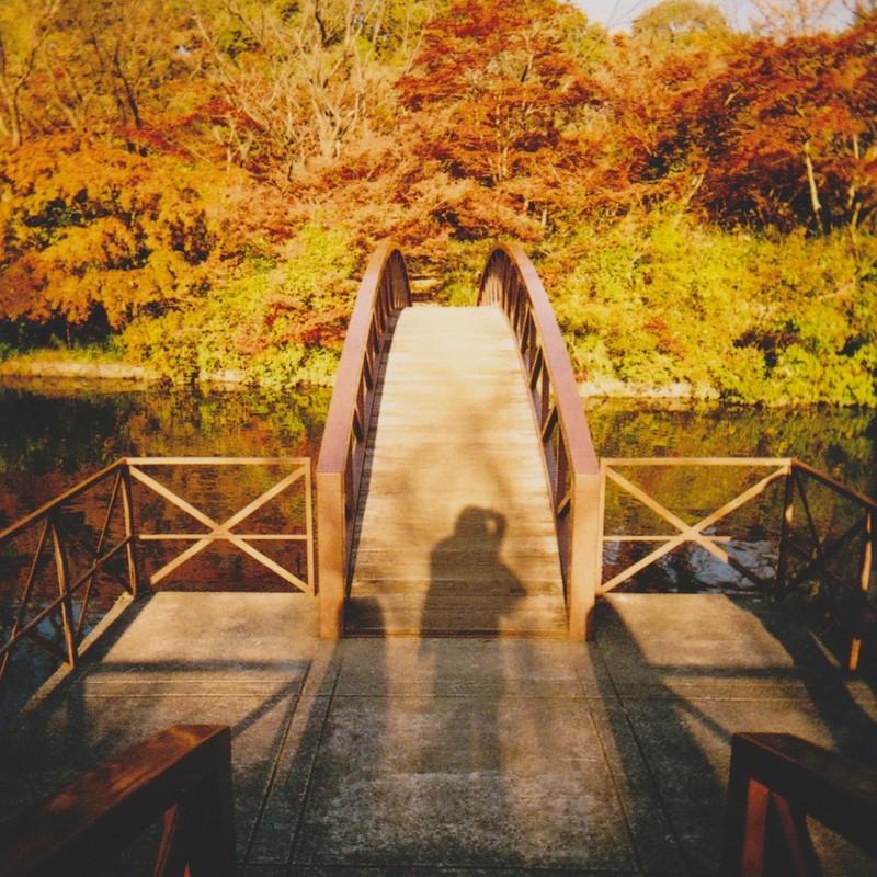 橋の上に猿の影