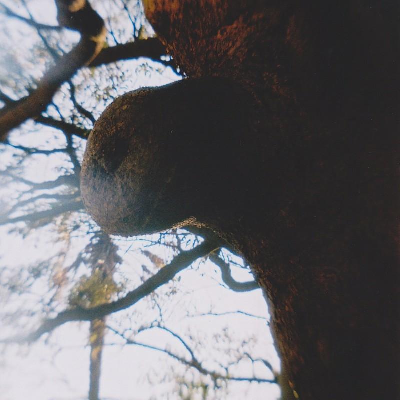天狗面の樹