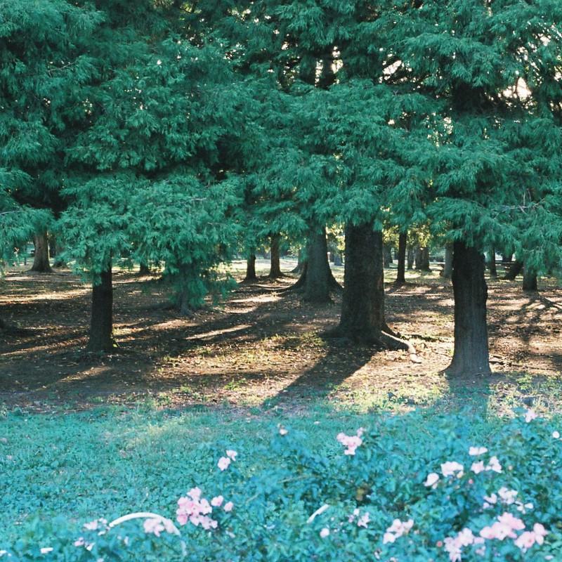 樹々と花と影と