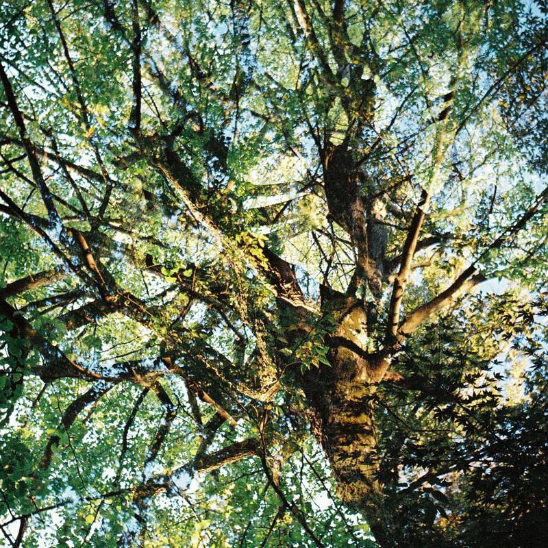 やけに枝の多い樹