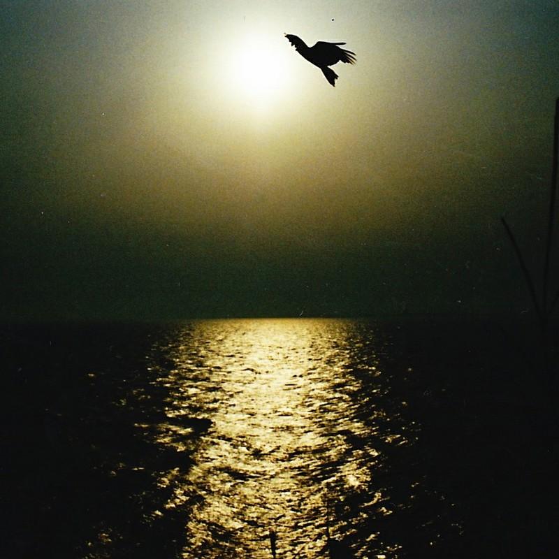 夕陽にトンビ