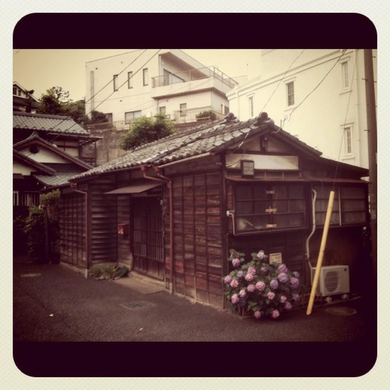 紫陽花の咲く旧家