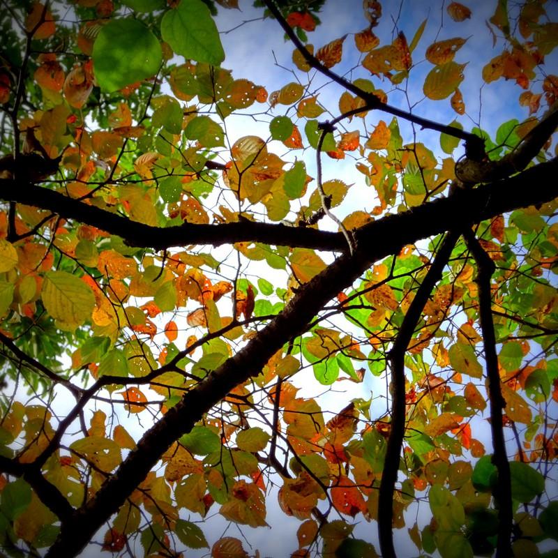 葉っぱのステンドグラス