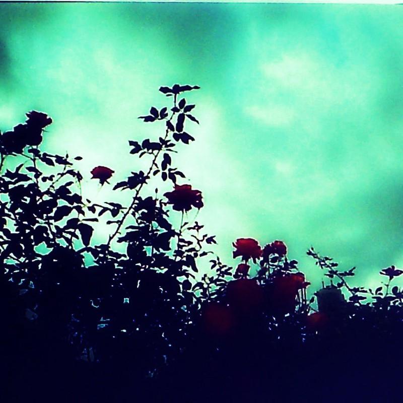 冬でもキレイに咲く花②