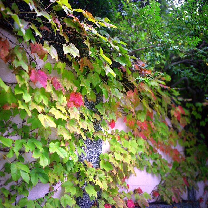 秋。準備中