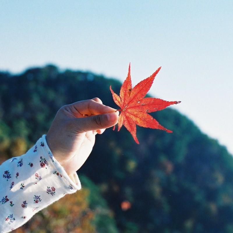 紅葉をかざして