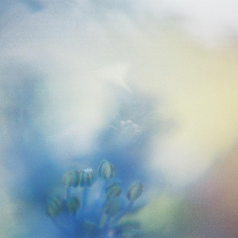 7月の青い花