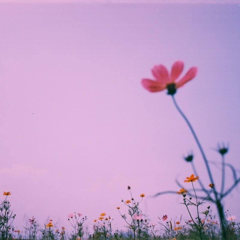 花が咲いて