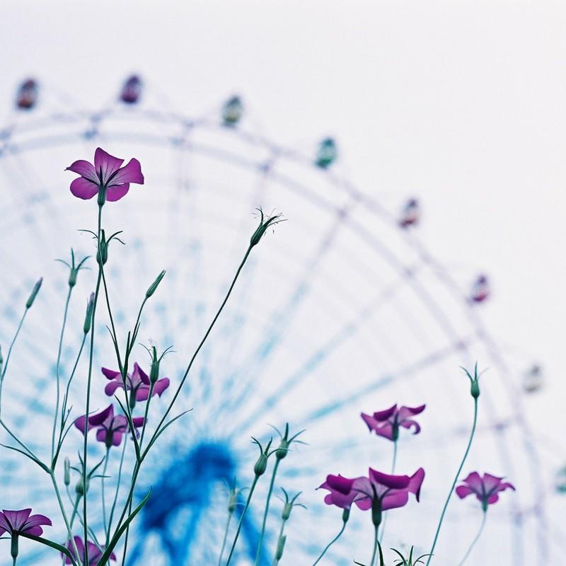 観覧車と花