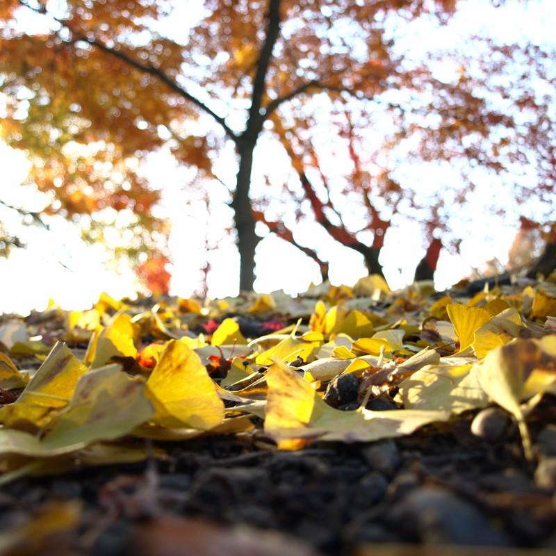 足もとの秋