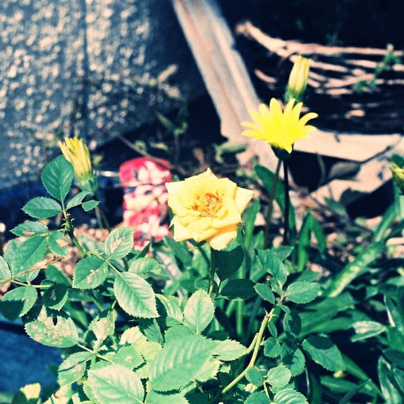 いつもの花