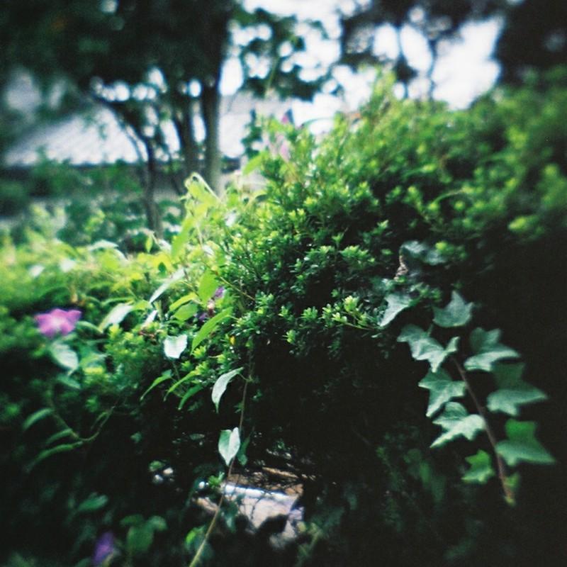 小さな茂み