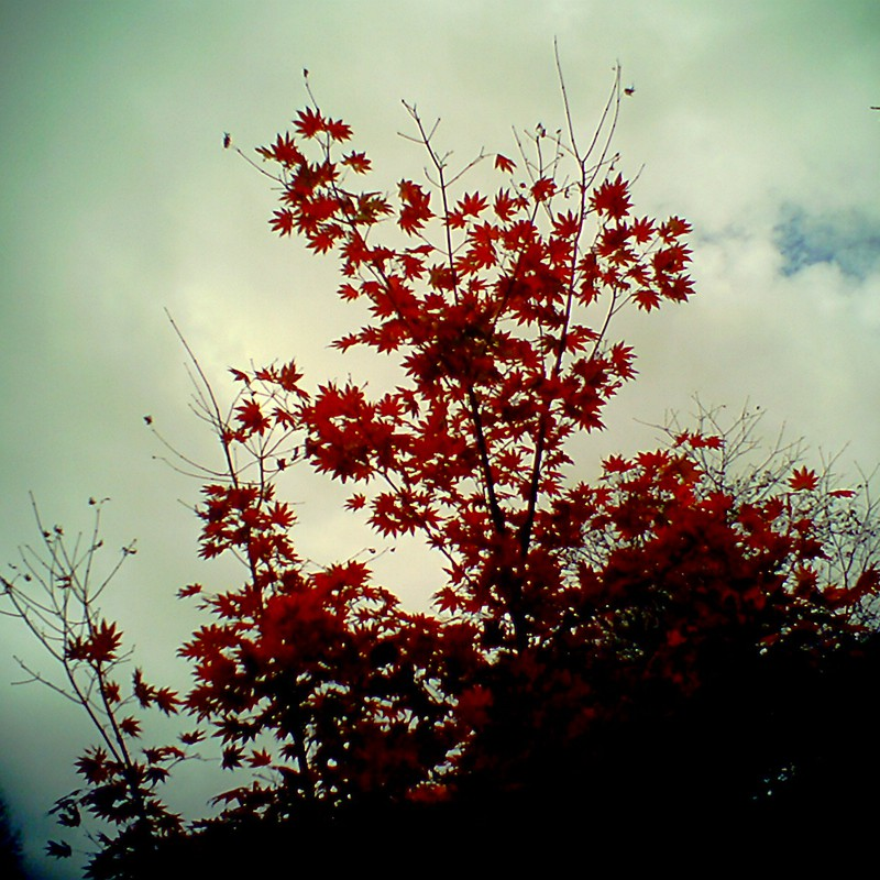 秋の追憶3